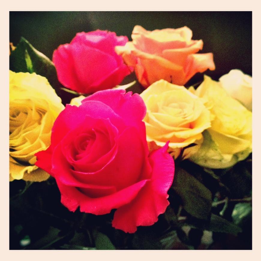 Roses 01.02.13